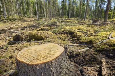 Un désastre écologique: 130 000 km² sont déboisés chaque année